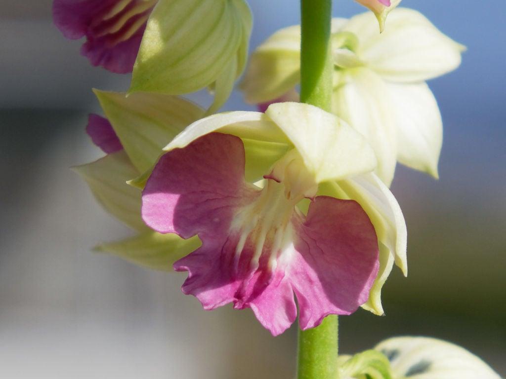 有楽x群青の花