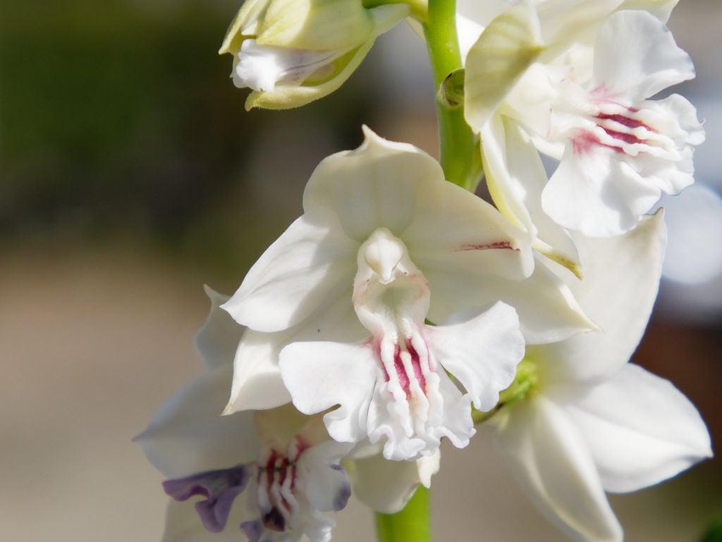 友禅x美舟の花
